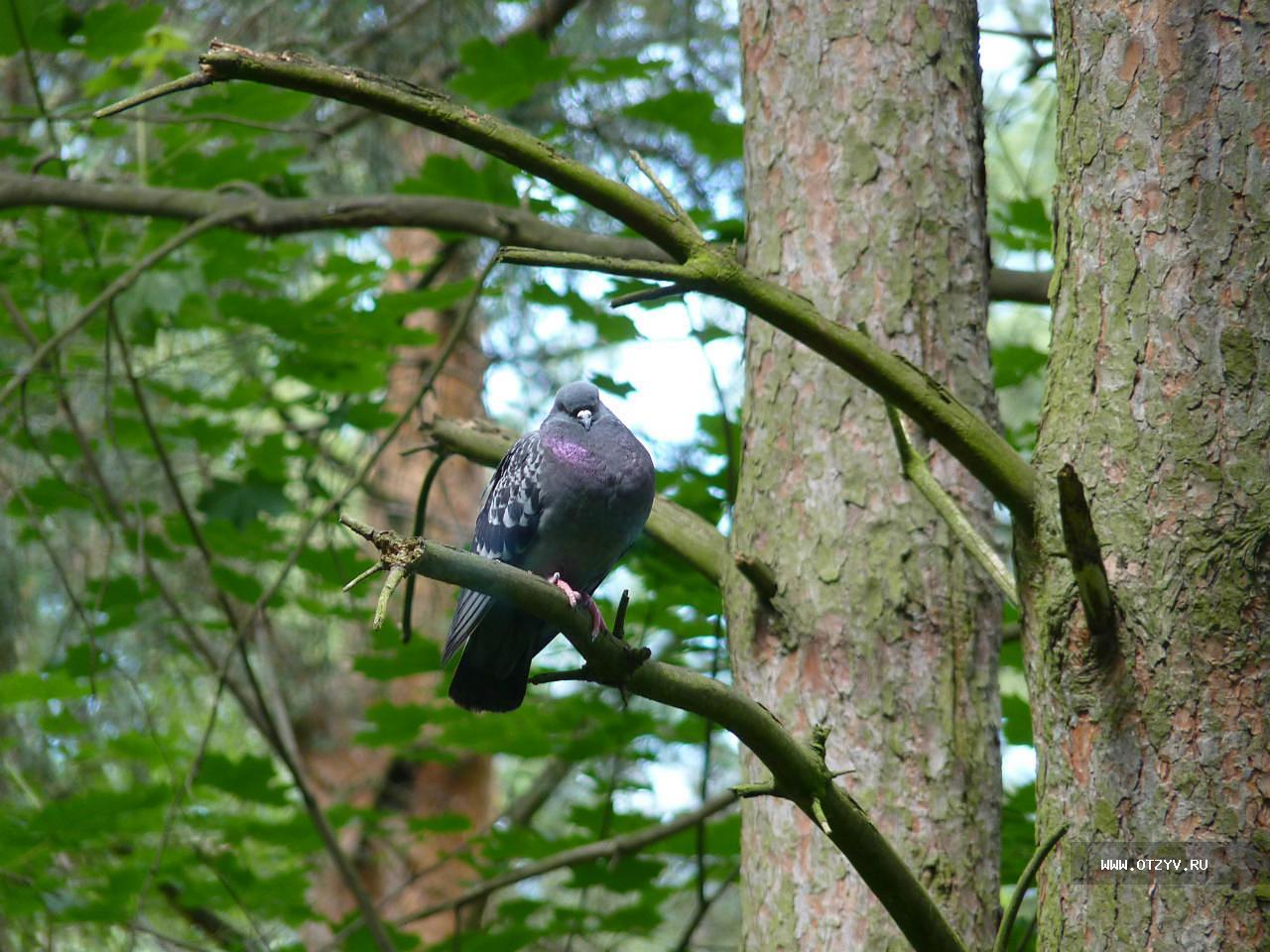 лесные птицы фото с описанием ломоносовский район требующие дополнительной отделки