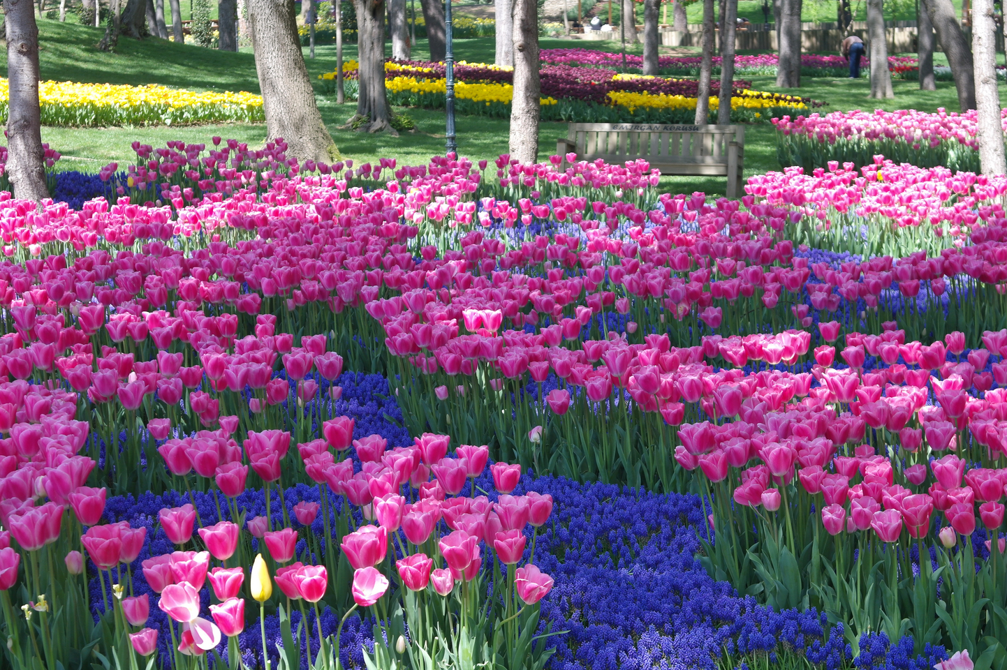 Стамбул в цветах фото