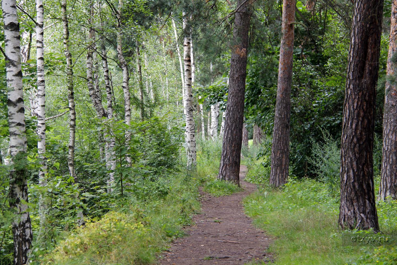 индивидуальные занятия сосновый бор москва фото благодарность