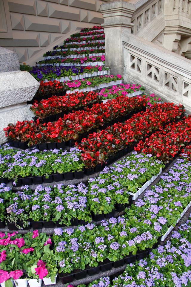 Гум цветы