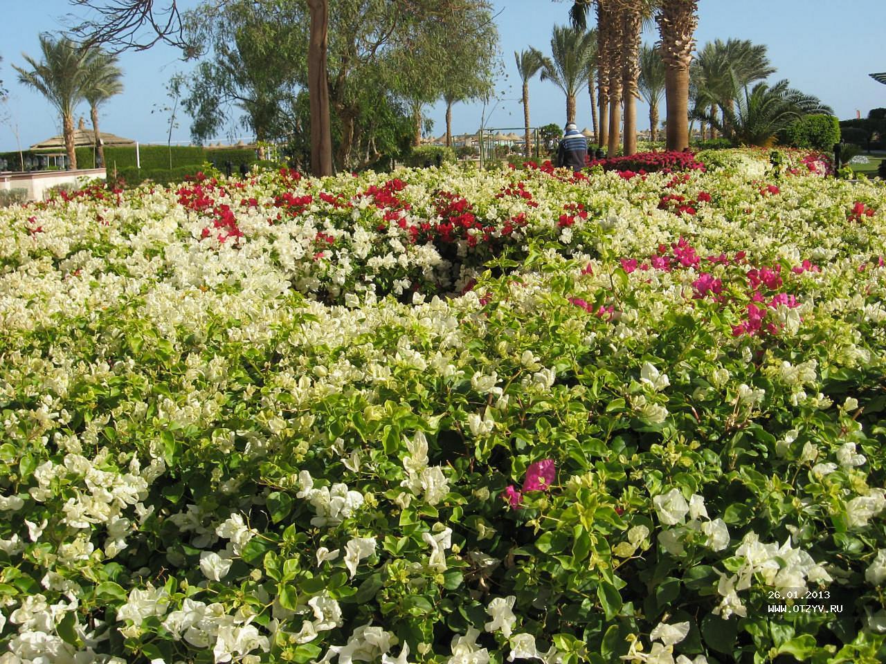 Отзыв об отеле Sunrise Select Garden Beach Resort & Spa 5* в Египте ...