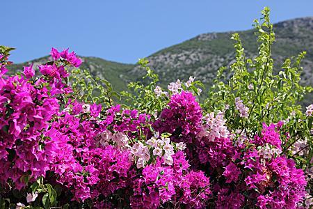 Греция. о.Корфу. Остров зеленого цвета. Июль 2019