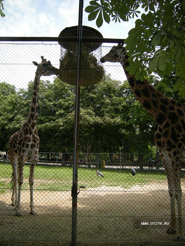Гарантия, венский зоопарк открытки