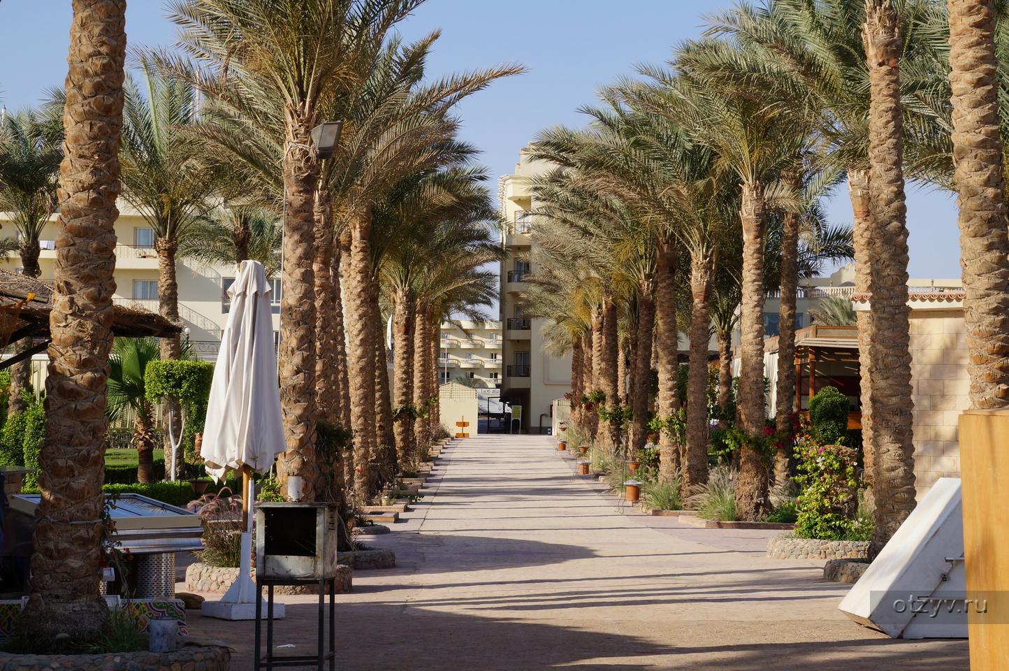 пузырек египет отель фестиваль фото летом сапета