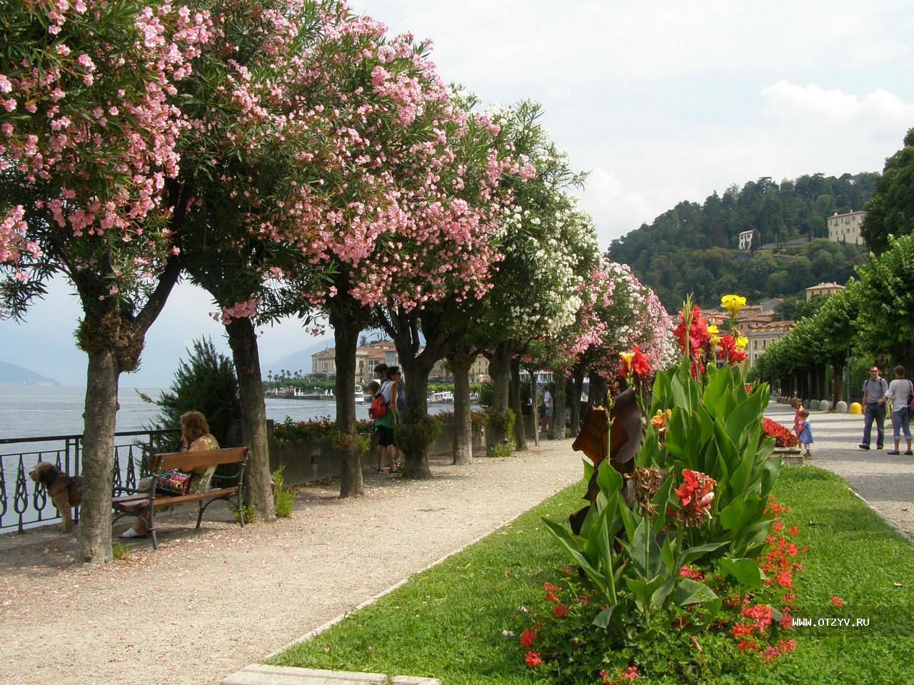 Доставка цветов по италии комо, цветов