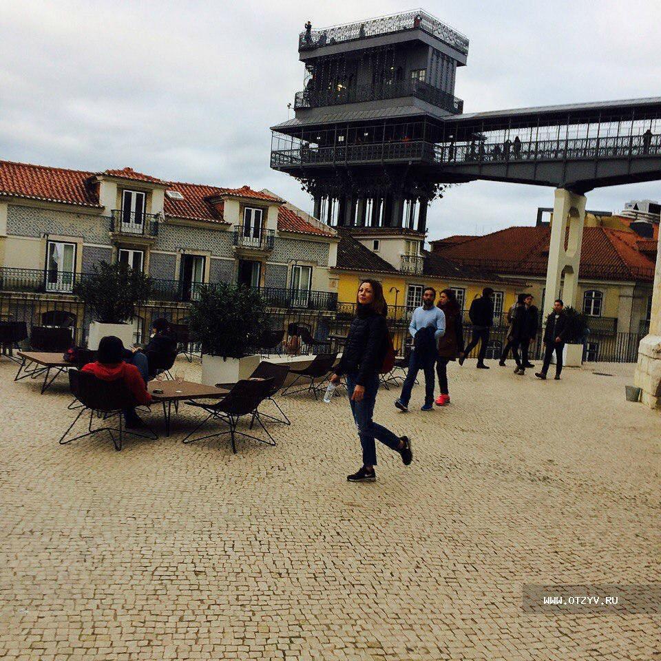 вьющийся кустарник португалия в феврале фото домов