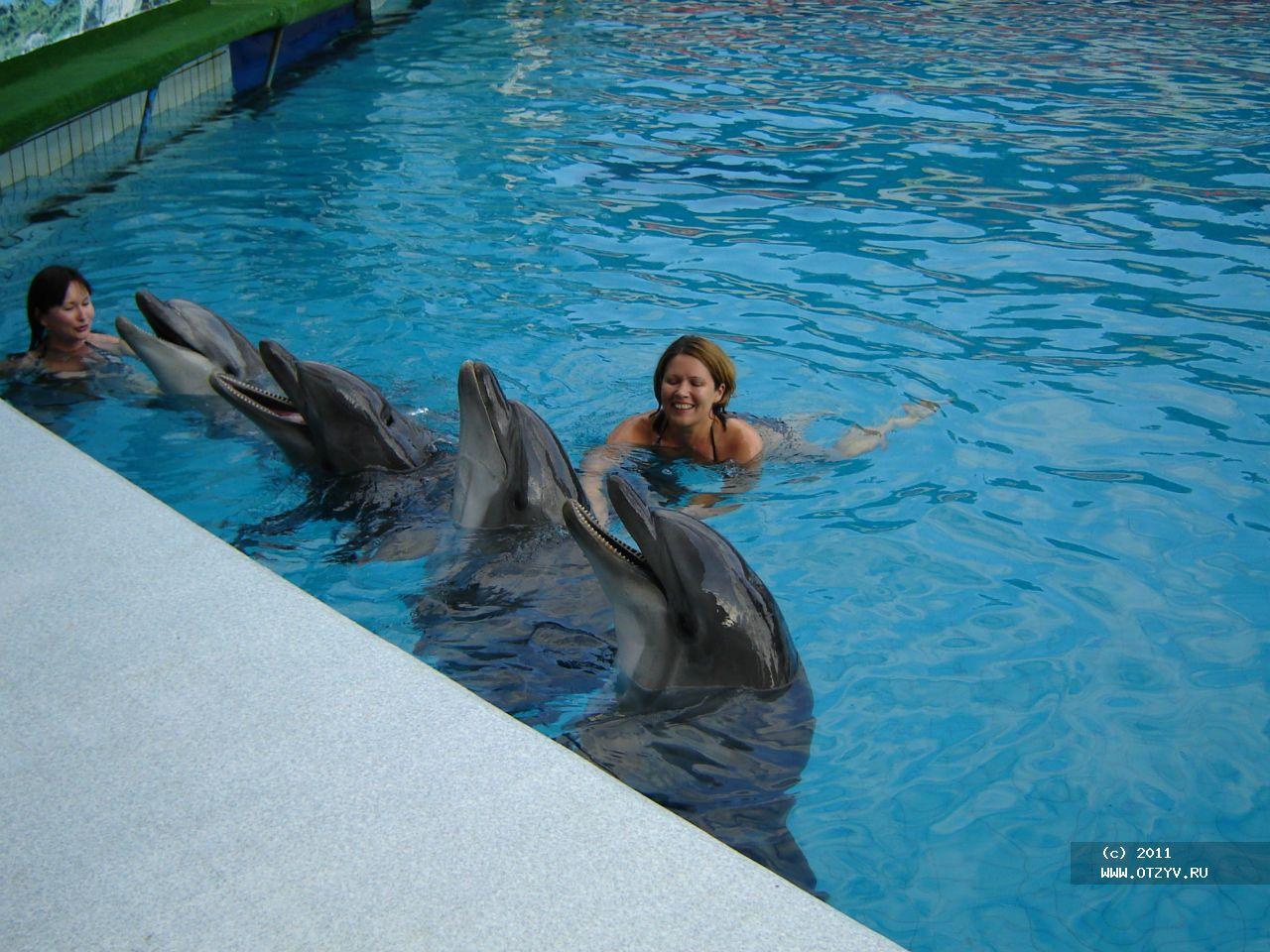 Дельфины были в хорошем...