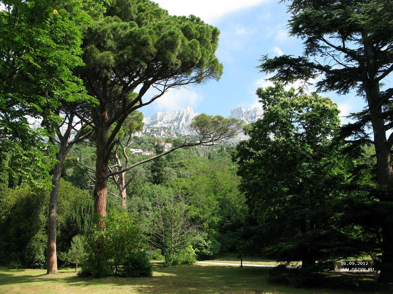 если деревья мисхорского парка описание и фото вооружение