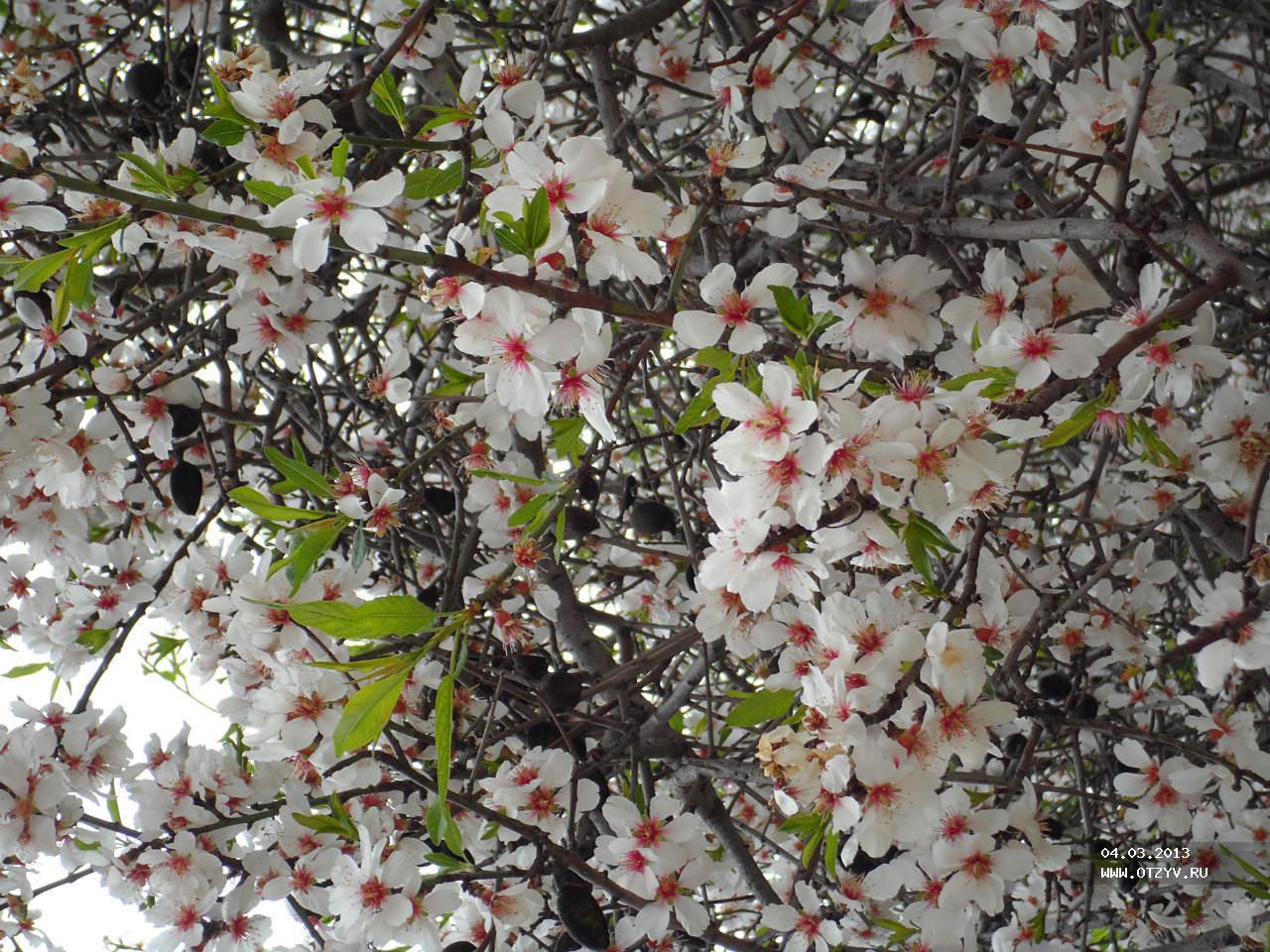 Ларнака весной