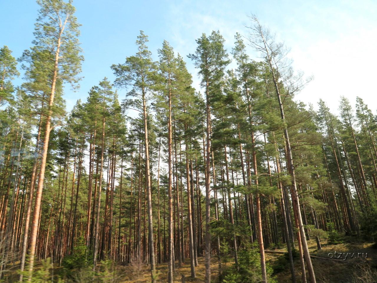 Рассказы первый раз в лесу с парой фото 507-672