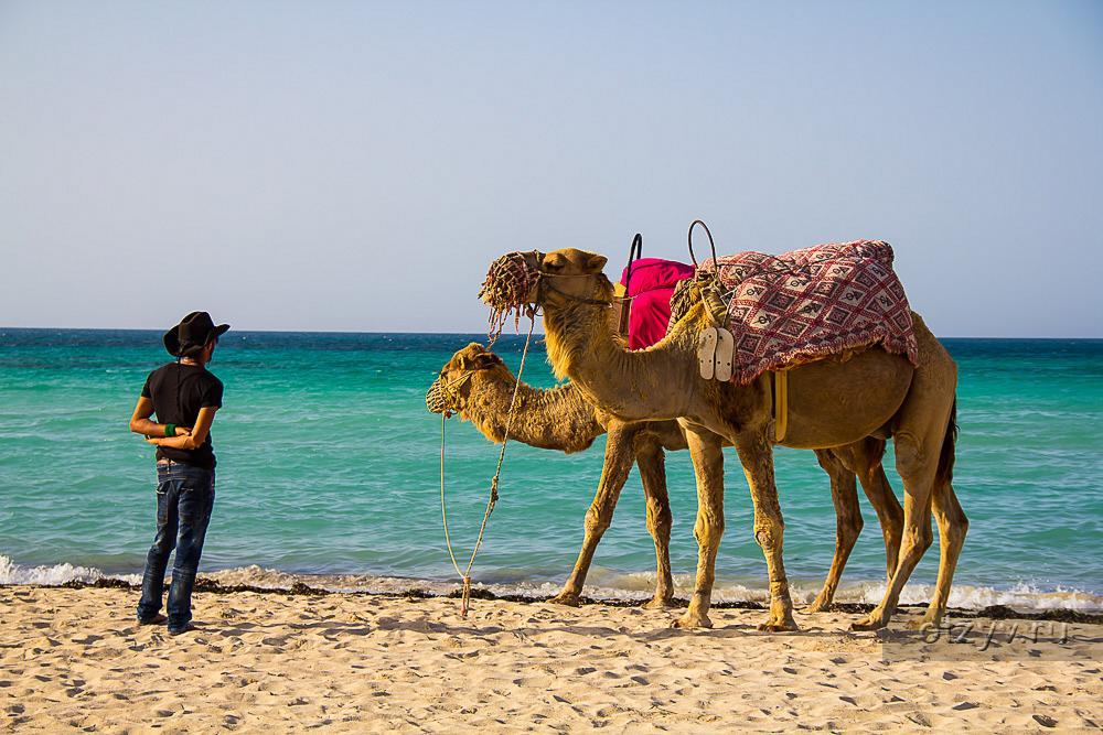 остров джерба тунис отзывы туристов фото вместо ракет