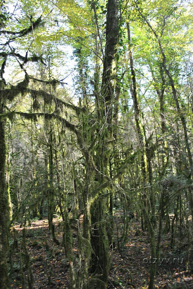 Завез бабу в лес фото 65-590