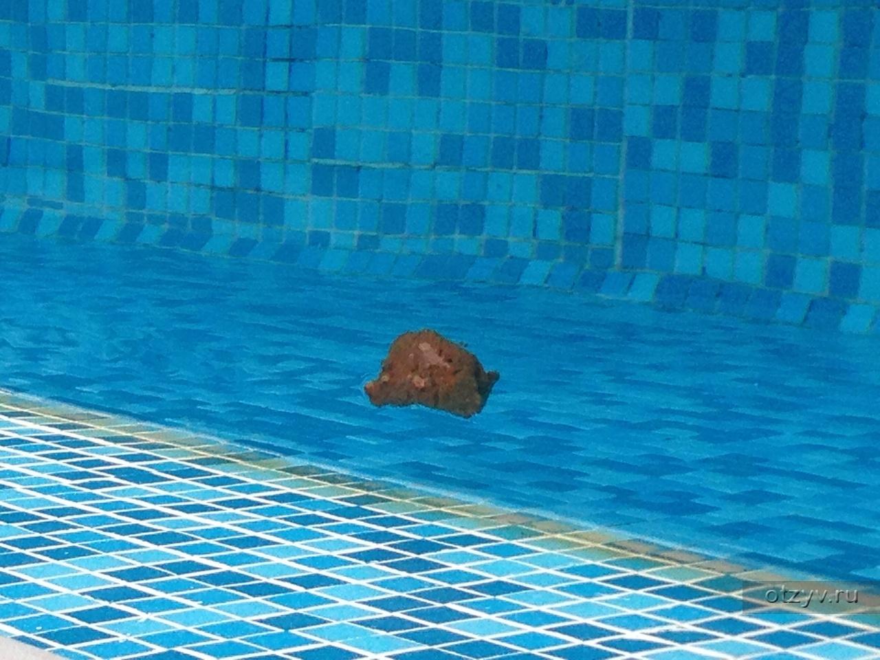 У баб в бассейне фото 2 фотография