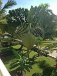 Grand Bahia Principe Bavaro фото
