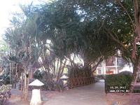 Natura Park ����