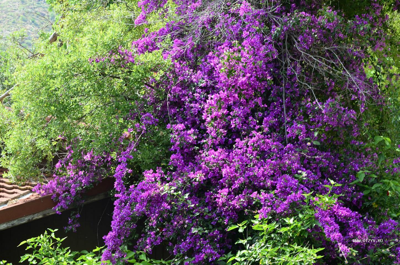 Мармарис цветок